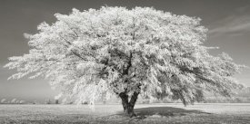 Frank Krahmer - Lime tree with frost, Bavaria, Germany