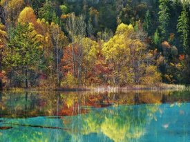 Frank Krahmer - Forest in autumn colours, Sichuan, China
