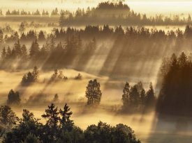 Frank Krahmer - Fog impression at Sindelbachfilz, Bavaria, Germany