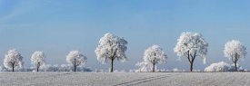 Frank Krahmer - Alley tree with frost, Bavaria, Germany