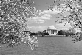 Carol Highsmith - Jefferson Memorial with cherry blossoms, Washington, D.C. - Black and White Variant