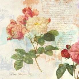 Eric Chestier - Redoute's Roses 2.0 I