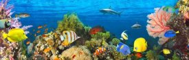 Pangea Images - Life in the Coral Reef, Maldives