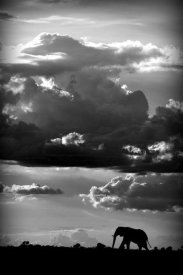 Wildphotoart - He Walks Under An African Sky