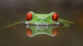 Kutub Uddin - Burning Eyes