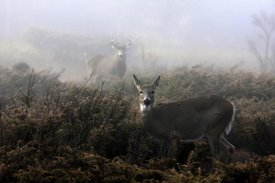 Jim Cumming - The Rut In On White-Tailed Deer