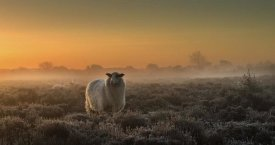 Rijko Ebens - Sheep In The Mist