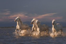 Rostovskiy Anton - Angels Of Camargue