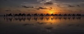 Louise Wolbers - Sunset Camel Safari