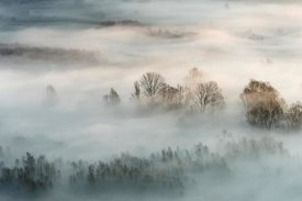Marco Galimberti - Winter Fog