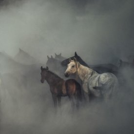 Huseyin Taskin - The Lost Horses