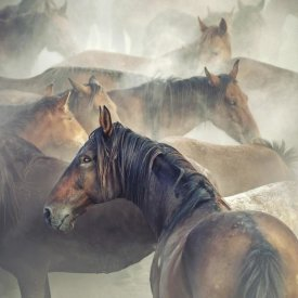 Huseyin Taskin - Tired Horses
