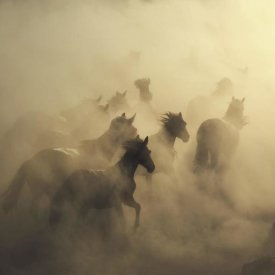 Huseyin Taskin - Migration Of Horses