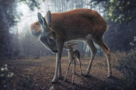 John Wilhelm - Mother And Fawn