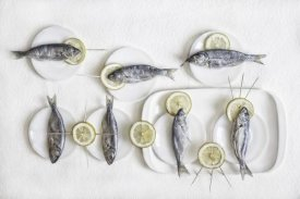 Dimitar Lazarov - Still Life With Fish