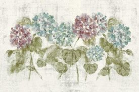Cheri Blum - Vibrant Row of Hydrangea No Border