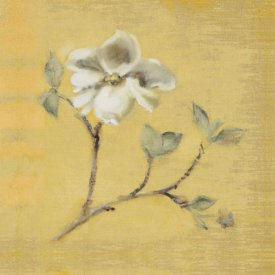 Cheri Blum - Dogwood Blossom on Gold