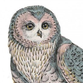 Daphne Brissonnet - Beautiful Owls IV Pastel Crop