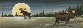 David Carter Brown - North Woods Moose Crop