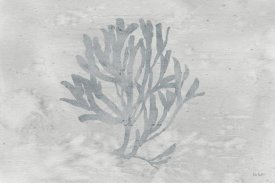 Lisa Audit - Silver and Gray Water Coral III