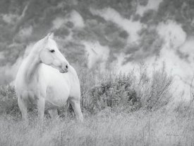 Lisa Cueman - Misty Mare Crop