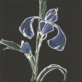Chris Paschke - Iris on Black IV