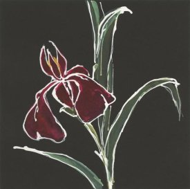 Chris Paschke - Iris on Black V