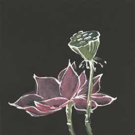Chris Paschke - Lotus on Black III