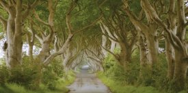 Pangea Images - The Dark Hedges, Ireland