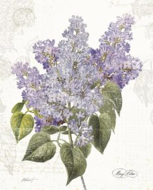 Katie Pertiet - May Lilac on White