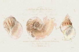 Katie Pertiet - Shell Collector I
