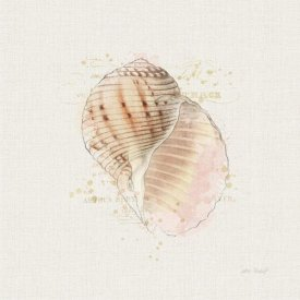Katie Pertiet - Shell Collector V
