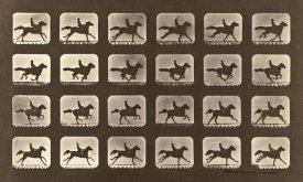 Eadweard J. Muybridge - Motion Study: Man Riding A Galloping Horse