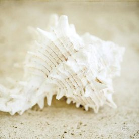 Brookview Studio - Seashore Shells II