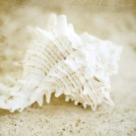 Brookview Studio - Golden Seashore Shells