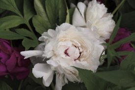 Brookview Studio - Peonies I