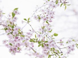 Brookview Studio - Spring Branches I