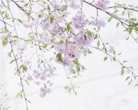 Brookview Studio - Spring Branches II