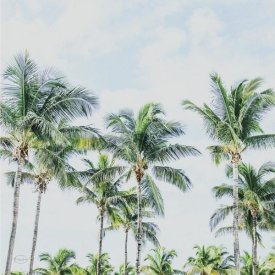 Brookview Studio - Southern Palms