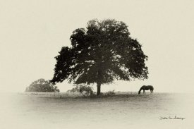 Debra Van Swearingen - Horses and Trees I