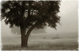 Debra Van Swearingen - Calm Mist no Limb