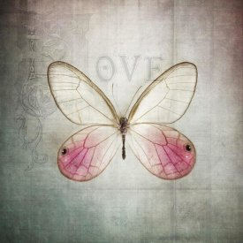 Debra Van Swearingen - French Butterfly I