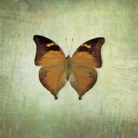 Debra Van Swearingen - French Butterfly VII