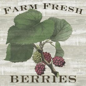 Sue Schlabach - Farm Fresh Raspberries Square