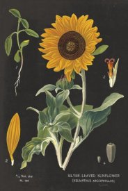 Sue Schlabach - Sunflower Chart