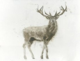 James Wiens - Stag
