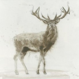 James Wiens - Stag v.2