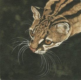 Jacquie Vaux - The Margay