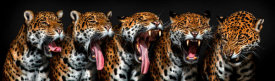 Pedro Jarque - The Yawning Sequence