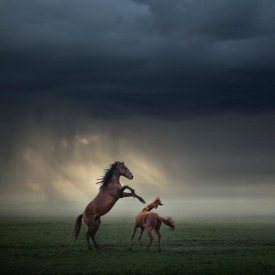 Huseyin Taskin - Horses Fight
